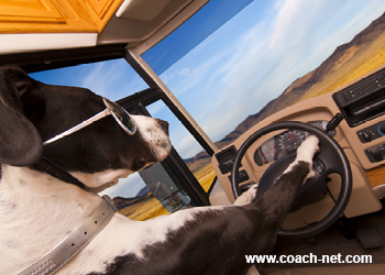 Dog driving RV